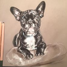 Pastel Print French Bulldog
